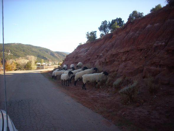 Wanderlusting Jarosa